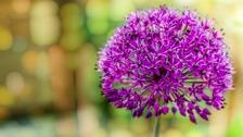 Pollen update - Saturday 18 July