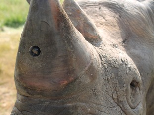 Experts hope the new technology can turn the tables on poachers.