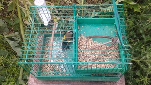 Trap and bird seized by police