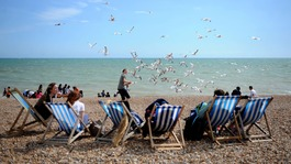Council seek solution to 'aggressive' seagulls in Brighton and Hove