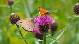 Pollen update - 23 July