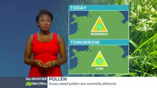 Central Pollen: moderate to low