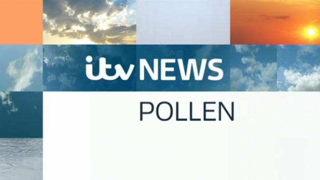 pollen_web_am