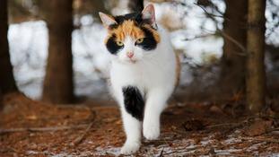 Cat in woodland