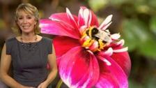 Emma in front of pollen photo