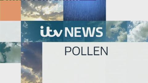pollen_web_sat
