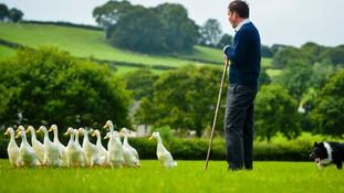 It's quackers! Farmer's dog and duck display team are a summer sellout