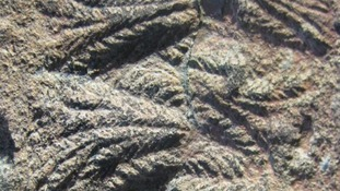 The fossils show the organisms looked like ferns