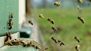 Three queen bees and 30,000 bees were stolen.