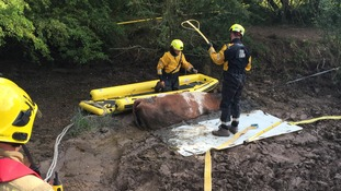 Firefighters work hard to rescue the cow.
