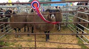Wigtown Show takes place at Bladnoch Park
