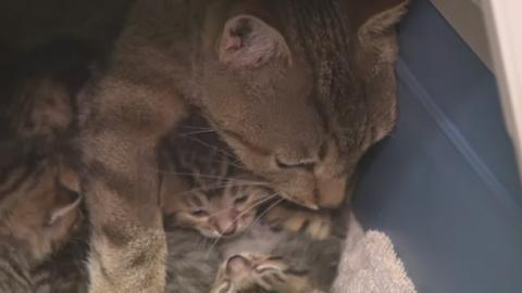 P-CAT_CRISIS_LK