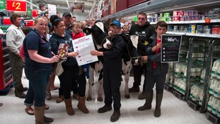 Two cows were taken into the Asda store in Stafford this lunchtime.