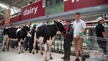 Dairy farmers take live cows into Stafford supermarket to campaign over milk prices.