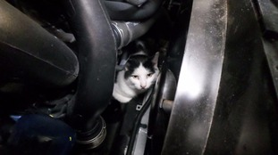 Darcy survived a 150 mile trip trapped in the car engine