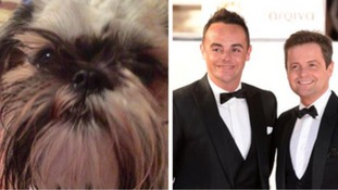 Ant and Dec help reunite family with their lost dog Hector