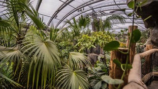 Monson Forest
