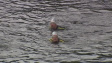 Hudson brothers swimming