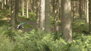 Cycling is a popular activity in Glentress Forest