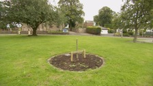 The tree was planted in memory of the Quintinshill rail disaster