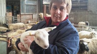 Farmer Christine Kinge loses 4 lambs to the Schmallenberg virus
