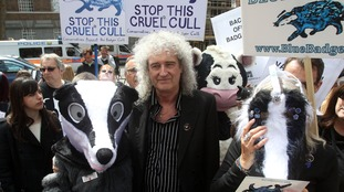 Brian May taking part in a protest march against the badger cull