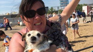Search for dog owner after girl, 4, is attacked on beach