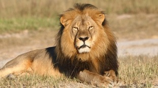 Cecil was shot by US dentist Walter Palmer last month.