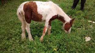 The foal is now recovering from its ordeal