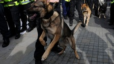 File photo of a police dog during a protest
