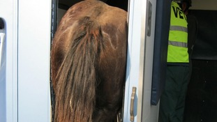 Rescue drama for horse left hanging over a Hampshire by-pass