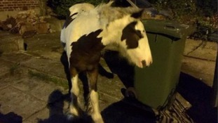 Police rescue horse found wandering the streets of East Ham