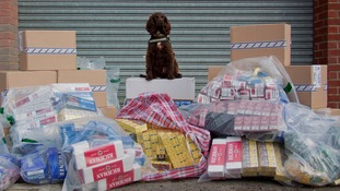 Sniffer dog Yo-yo sits atop his find of illegal cigarettes
