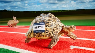 Bertie now lives in a VIP enclosure at Adventure Valley in County Durham.