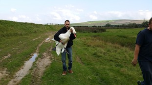 Chris Riddington carrying the rescued swan