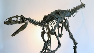 155 million year old dinosaur skeleton could sell at auction for £500,000