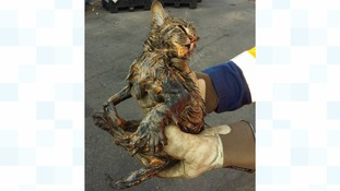 Binmen pluck cat from truck load of rubbish bound for incinerator