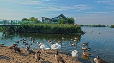 Attenborough Nature Reserve, Derby