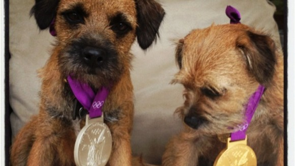 Andy Murray's dogs wearing the tennis champion's medals