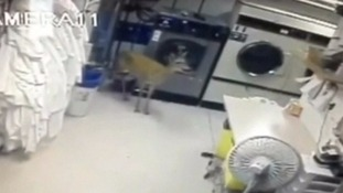 the confused deer in a laundry room