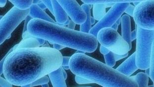 E.coli virus