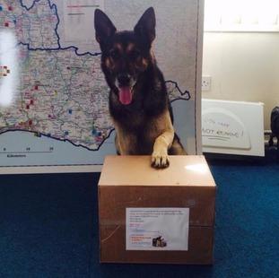 Spud, Sussex Police Dog
