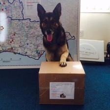 Spud, Sussex Police Dog