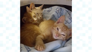 Family of cats abandoned in cat carrier