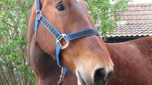 Gracie-May at HorseWorld near Bristol
