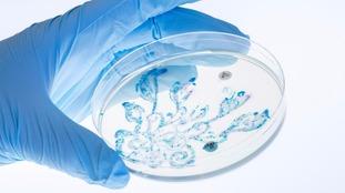 Bacteria as artwork
