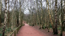 Sherwood Forest in Nottinghamshire