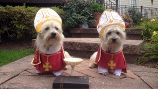 Papal visit sparks 'Pope dog' trend