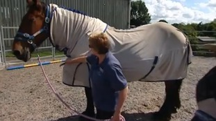Horse needs pyjamas to ease itching condition