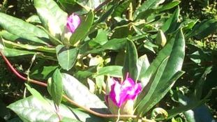 Simon's Blog - Autumn Or Spring?